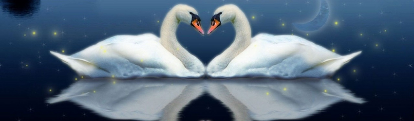 Swans-Pond-Water-Night-Fog-Reflections-Heart-Couple-Love-1800x2880